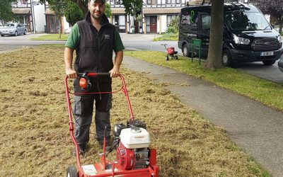 Lawn Care Programme by darraghconnolly.ie